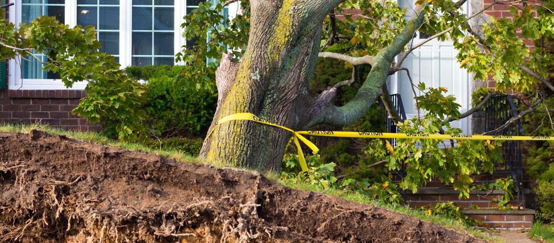 Emergency-Tree-Removal-Buffalo-WNY